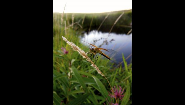 Kelly Sandager of Hills picture of a dragonfly was named May winner of Luverne Area Chamber's photo contest.