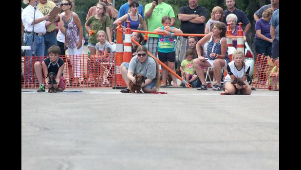 This heat of contestants take their marks at the starting line during the Wiener Dog Races.
