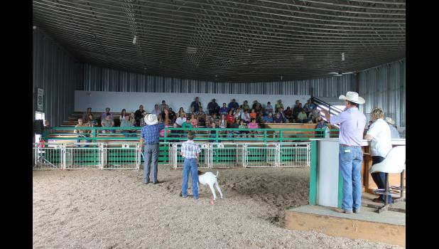 Saturday morning's ribbon auction allows 4-H'ers of market animals to sell their ribbon to offset expenses raising the animal. Pictured above (from left) are auctioneer Bryan Fodness, goat exhibitor and blue ribbon winner Luke Fuerstenberg, with auctioneers Andrew Fodness, Yvette Vander Brink and Duane Mulder.