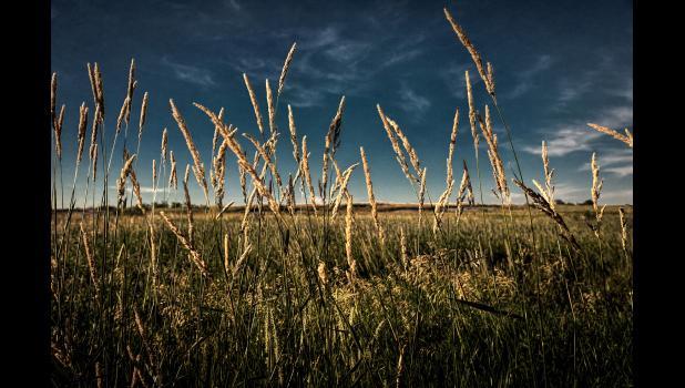 """Tall Grass Prairie Texture"" by Kelly Doyle"