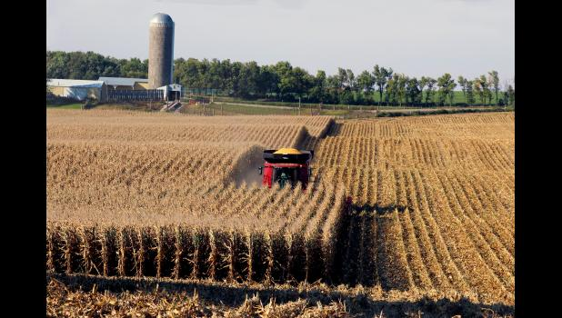 Lyle Rollag's combine gobbles up stalks and fills grain carts with corn Friday, Sept. 23, in this field along County Road 5 in western Rock County. Rollag was combining corn for Blac-X Farms that day.