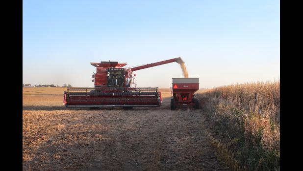 Jerry and Brad Schneekloth joined the 2019 soybean harvest Tuesday in their fields west of Luverne where this photo was taken Tuesday evening, Oct. 8.
