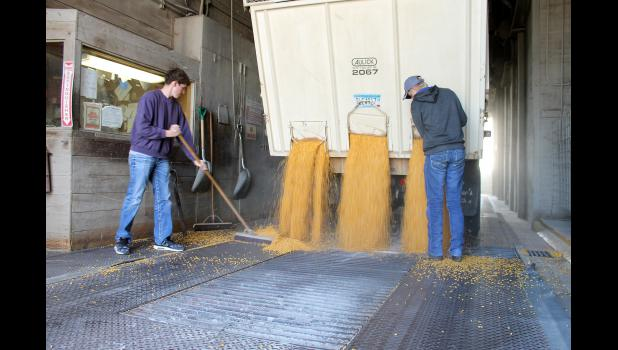 Luverne-Adrian FFA Chapter members Jack Baustian (left) and Jacob VanSanten empty a truck of combined corn Tuesday afternoon, Oct. 20, at the CHS-Eastern Farmers Elevator in Luverne. The chapter raised almost $6,000 in its annual corn drive.