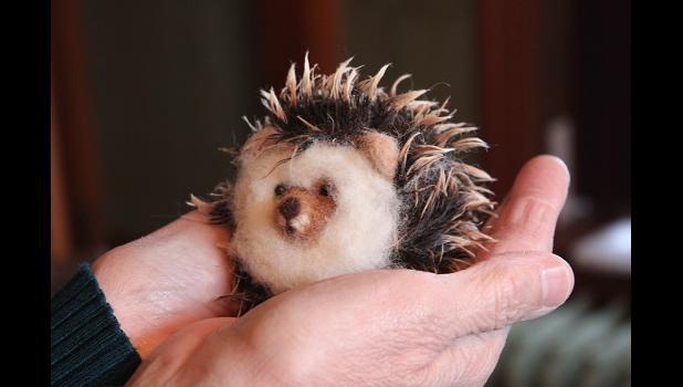 A hedgehog nestles in Ceynowa's palm.
