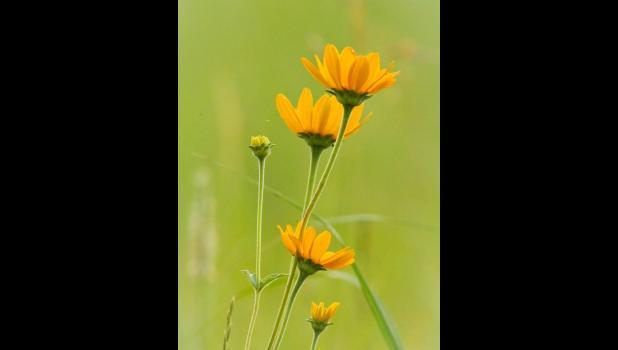 Sunflowers — Steve Bloemendaal
