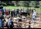 Attendees of the Oct. 5 Bovine Emergency Response Program assemble near a corral at the Rock Veterinary Clinic, Luverne, for instruction on how to handle an animal in crisis.